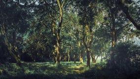 Sagolikt sceniskt skoglandskap i sommar Begreppet av färgrik naturlig skönhet av naturen Ensamhet som tycker om sikten, vilar arkivbild