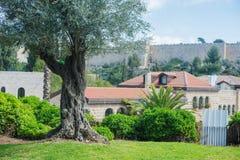 Sagolikt träd på bakgrunden av Jerusalem på en solig dag royaltyfri fotografi