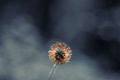 Sagolikt träd som täckas med frost Royaltyfria Bilder