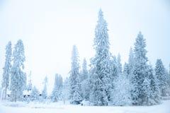 Sagolikt vinterlandskap, julgranar royaltyfri bild