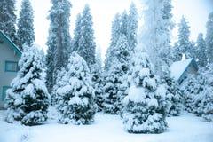 Sagolikt vinterlandskap, julgranar arkivfoton