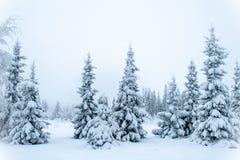 Sagolikt vinterlandskap, julgranar fotografering för bildbyråer