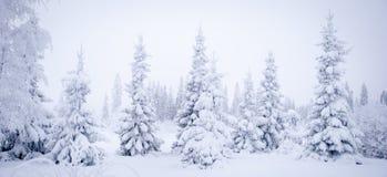 Sagolikt vinterlandskap, julgranar arkivfoto