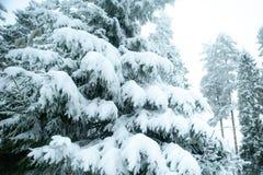 Sagolikt vinterlandskap, julgranar royaltyfri fotografi