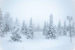 Sagolikt vinterlandskap, julgranar i snön, förkylning royaltyfria foton