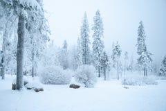 Sagolikt vinterlandskap, träd i snön, arkivbild