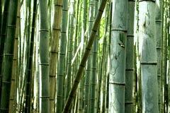 Sagono Arashiyama竹子树丛 免版税库存照片