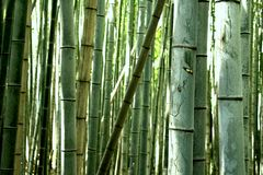 Sagono Arashiyama Bamboo Grove. royalty free stock photos