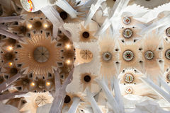 Sagrada Famiia Ceiling Royalty Free Stock Photo