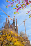 Sagrada Familia with sakura in Barcelona, Spain Royalty Free Stock Photography