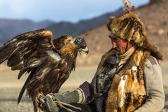 Berkutchi Eagle Hunter with golden eagle during hare hunting, in desert mountains of Western Mongolia. SAGSAY, MONGOLIA - SEP 28, 2017: Berkutchi Eagle Hunter Royalty Free Stock Image