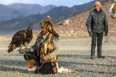 Berkutchi Eagle Hunter while hunting to the hare with a golden eagles on his arms Stock Photos