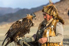 Berkutchi Eagle Hunter while hunting to the hare with a golden eagles on his arms in the mountains of Bayan-Olgii aimag. SAGSAY, MONGOLIA - SEP 28, 2017 Stock Image