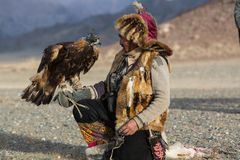 Berkutchi Kazakh Eagle Hunter while hunting to the hare with a golden eagles on his arms royalty free stock images