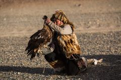 Berkutchi Kazakh Eagle Hunter while hunting to the hare with a golden eagles on his arms i royalty free stock photos