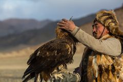 Berkutchi Kazakh Eagle Hunter while hunting to the hare with a golden eagles on his arms in the mountains of Bayan-Olgii aimag royalty free stock photos