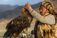 Golden Eagle Hunter came to took the prey from the bird, stroked it, gave her a piece of meat Stock Photo