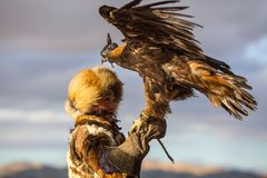 Young Kazakh Eagle Huntress Berkutchi woman with horse while hunting to the hare with a golden eagles on his arms. SAGSAY, MONGOLIA - SEP 28, 2017: Young Kazakh Stock Photography