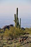 saguaro ερήμων κάκτων Στοκ Εικόνες