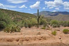 saguaro кактуса Аризоны Стоковые Изображения