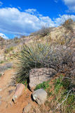 saguaro национального парка Стоковые Изображения RF