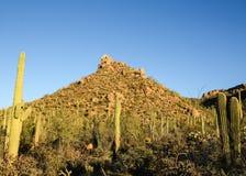 saguaro национального парка западный Стоковая Фотография RF