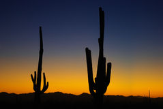 Заход солнца Saguaro, Аризона Стоковые Изображения RF