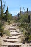 Saguaro Стоковые Фотографии RF
