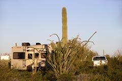 saguaro stock afbeelding