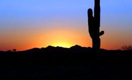 saguaro Obrazy Stock