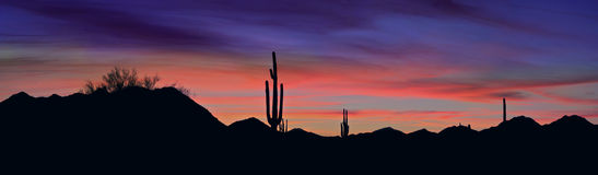 Saguaro Imagens de Stock