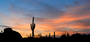 Saguaro Fotografia de Stock