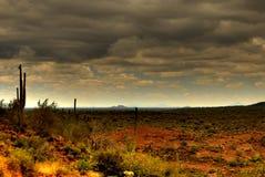 saguaro 80 пустынь стоковое фото rf
