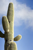 Saguaro Against Sky With Clouds Stock Photo