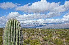 Saguaro Against Snow Covered Mountains. A giant saguaro cactus stands in front of snow covered mountains in Saguaro National Monument near Tucson, Arizona Royalty Free Stock Image