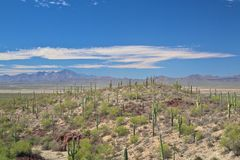 Saguaro, arizona desert landscape Royalty Free Stock Images