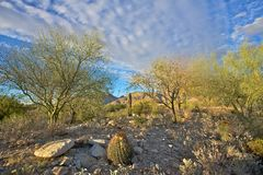 Saguaro, arizona desert landscape Stock Images