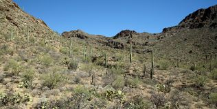 Saguaro cacti in a mountain valley in the Arizona Sonoran Desert. West of Tucson Stock Photo