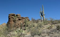 Saguaro cacti and rock formations in the Arizona Sonoran Desert Royalty Free Stock Photography