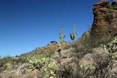 Saguaro cacti and rock formations in the Arizona Sonoran Desert Royalty Free Stock Image