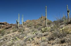 Saguaro cacti and rock formations in the Arizona Sonoran Desert. West of Tucson Stock Photo