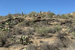 Saguaro cacti and rock formations in the Arizona Sonoran Desert. West of Tucson Stock Image