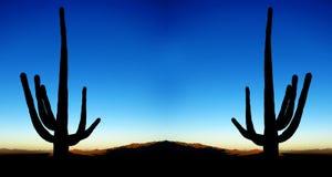 Saguaro Cacti Sunrise in Desert Stock Image