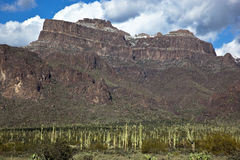 Saguaro Cacti and the Superstitions Stock Images