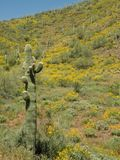 Saguaro cactus Stock Photos