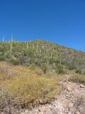 Saguaro Cactus Stock Photo