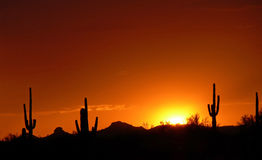Saguaro cactus against red sunset/sunrise Stock Photography