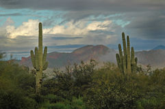 Saguaro Cactus And Superstition Mountains 2 Royalty Free Stock Photo