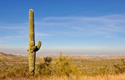Saguaro cactus Arizona Royalty Free Stock Photo