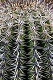 Saguaro Cactus Arizona Stock Photo